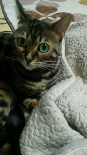 ハルの福猫